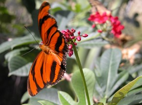 Butterfly Farm - Accommodation Port Macquarie