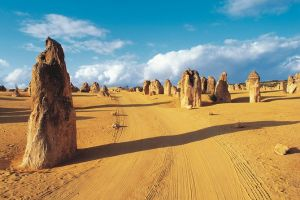 Pinnacles Desert Koalas and Sandboarding 4WD Day Tour from Perth - Accommodation Port Macquarie