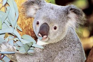 Perth Zoo General Entry Ticket and Sightseeing Cruise - Accommodation Port Macquarie