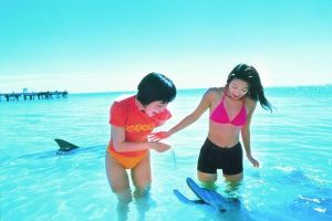 Monkey Mia Dolphins  Shark Bay Air Tour From Perth - Accommodation Port Macquarie