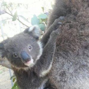 West Oz Wildlife Petting Zoos - Accommodation Port Macquarie